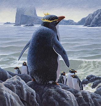 Chatham penguin - Reconstruction by Sean Murtha
