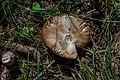 Mushroom Cap PLT-FG-2.jpg