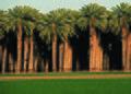 NRCSAZ02059 - Arizona (401)(NRCS Photo Gallery).jpg