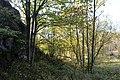 NSG Steinbruch Holzmühle (52a).jpg