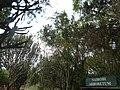 Nairobi Arboretum Park 11.JPG
