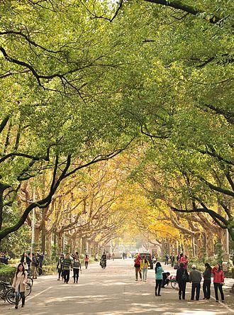 Nanjing University - The Gulou campus in autumn
