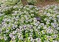 National Arboretum in May (22946382463).jpg