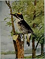 Nature neighbors, embracing birds, plants, animals, minerals, in natural colors by color photography, containing articles by Gerald Alan Abbott, Dr. Albert Schneider, William Kerr Higley...and other (14564259680).jpg