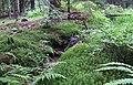 Nature reserve Prameniště (10).jpg