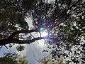Nature sun.jpg