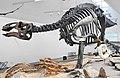 NaturmuseumSG Dino.jpg