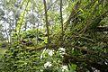 Naturschutzgebiet Haseder Busch - Im Haseder Busch (31).jpg