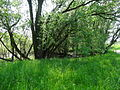 Naturschutzgebiet Heuckenlock 21.05.2014 18.JPG
