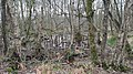 Naturschutzgebiet Venner Moor im Kreis Coesfeld, Wintertag.jpg