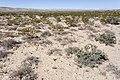 Near Cornucopia Draw - Flickr - aspidoscelis (5).jpg