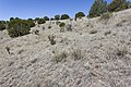 Near Ft. Stanton - Flickr - aspidoscelis (2).jpg