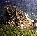 Needle Rock - geograph.org.uk - 481452.jpg