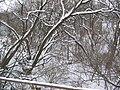 Nesvoya, Chernivets'ka oblast, Ukraine, 60361 - panoramio - edykbo (9).jpg