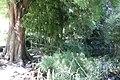 Neustadt Strasbourg jardin botanique de Strasbourg (43376140745).jpg