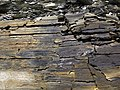 New Albany Shale (Upper Devonian; MacDonald Knob Outcrop, Bullitt County, Kentucky, USA) 2 (30963016337).jpg