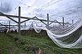 New Zealand - Vineyard - 9878.jpg
