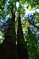 Newhalem, WA - Trail of the Cedars 18.jpg