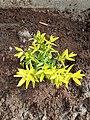 Newly planted flower.jpg