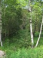Niva Horského potoka (009).jpg
