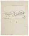 Noctilio leporinus - 1700-1880 - Print - Iconographia Zoologica - Special Collections University of Amsterdam - UBA01 IZ20800005.tif