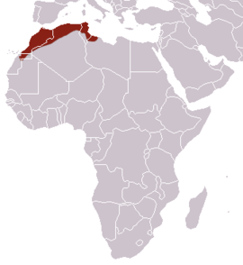 North African Elephant Shrew area.png