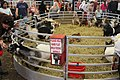 North Florida Fair 2018 09.jpg