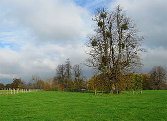 North Stoneham Park - The Avenue portion of North Stoneham Park in 2011, described as 'a very high grade Brownian landscape'.