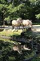 Oberhausen - Kaisergarten - Tierpark 06 ies.jpg