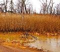 Ohio Valley Mushroom Farm, Acid-Mine Drainage (AMD) (13670967915).jpg