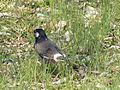 Oiseau japon 2.JPG