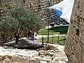 Old Jerusalem Citadel P1050680.JPG