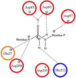 OmpT - Image: Omp T Mechanism