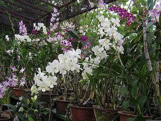 Plant nursery - An Orchid nursery