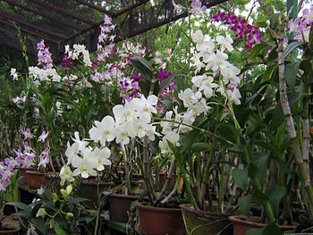 An Orchid nursery