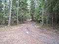 Orekhovo-Zuyevsky District, Moscow Oblast, Russia - panoramio - citrin (4).jpg