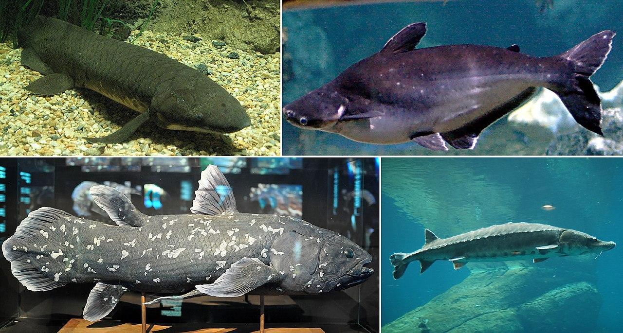 više riba u moru dating service