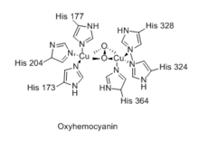 Image result for hemocyanin structure
