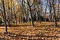 Pörtschach Halbinsel Buchenwald 12112015 8906.jpg