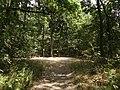 Přírodní park Škvorecká obora-Králičina - lesy východně od sídliště Rohožník a severně od Květnické studánky (8).JPG