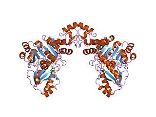 Cys/Met metabolism PLP-dependent enzyme family