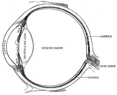 PSM V45 D215 Diagrammatic section of the human eye.jpg