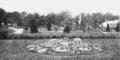 PSM V62 D208 A mosaic of succulents.png