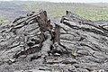 Pahoehoe Lava Tumulus Kalapana Hawaii.jpg