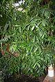 Palma de Bambu & Cuba - Mexico (1) (11982989784).jpg