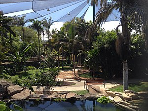 Palmetum Tenerife 08.jpg
