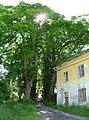 Palvinov, památné stromy 02.jpg