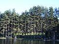 Park jezero zlatibor.jpg
