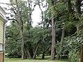Park pałacowy - Aleksandrów Kuj 01.jpg