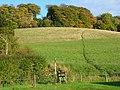 Pasture, Slough Bottom - geograph.org.uk - 1024171.jpg